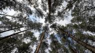 Der Wettlauf gegen den Klimawandel eilt: Jeder Baum bindet im Durchschnitt zirka zehn Kilogramm CO2 im Jahr.