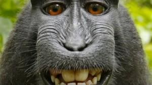 Für Affen ist die Rechtslage ungünstig