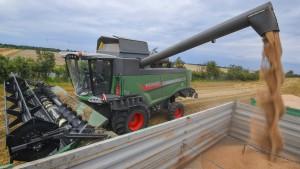 Frost und Regen vermiesen Landwirten die Ernte