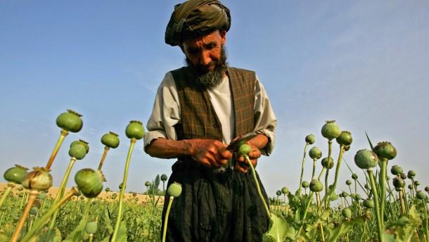 Opiumpreise in Afghanistan stark gestiegen
