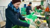 Qualität zählt: Mitarbeiter des Bio-Lieferdienstes Querbeet beim Verpacken der Ware.