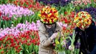 Am 21. Januar war Nationaler Tulpentag in den Niederlanden - damit eröffnen die Niederländer jedes Jahr die Saison.