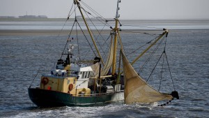 Wie kann man Meere nachhaltig bewirtschaften?