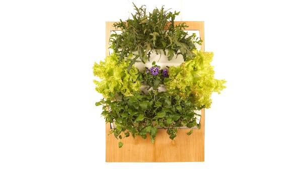 vertikales gem sebeet salat von der wohnzimmerwand. Black Bedroom Furniture Sets. Home Design Ideas