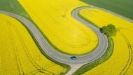 Der Biodiesel wird Opfer seines eigenen Erfolges