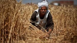 EU will Agrarexporte nach Afrika nicht mehr subventionieren