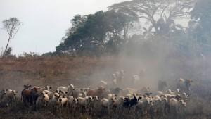 H&M kauft vorerst kein Leder mehr in Brasilien