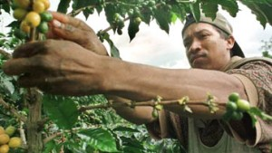 Kolumbiens Kampfansage an Starbucks
