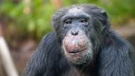Affen machen mehr Gewinne als Investoren.