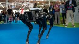 Roboterhunde und intelligente Autos