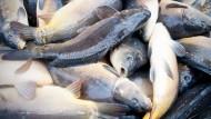 DDR-Experiment beschäftigt Fischer noch heute