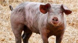 """""""Kein Recht auf täglich Billigfleisch"""""""