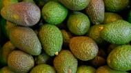 Avocados sind in Neuseeland gerade sehr begehrt und kosten umgerechnet 3,75 Euro - pro Frucht.