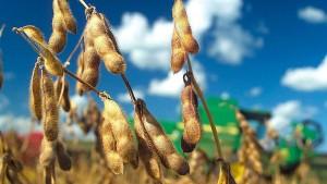 EU-Kommission genehmigt Einfuhr von sechs Genpflanzen
