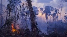 """Der """"Tropen-Trump"""" bedroht den Regenwald"""