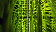 """""""Eine stärker vernetzte Welt wird verletzlicher für Cyberattacken und Risiken, die sich aus der Konzentration von Geschäften ableiten"""", so die Experten des Weltwirtschaftsforum."""