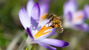 Pestizidverbot freut Imker und ärgert Bauern und Agrarindustrie