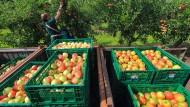 Auch bei Lidl kann man bald Obst online bestellen