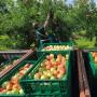 Bald können Kunden bei Lidl Obst online bestellen.