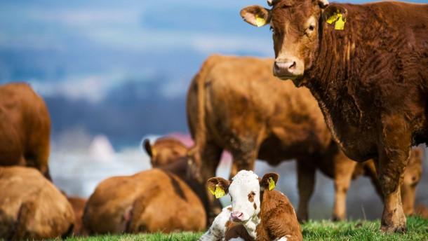 Rindfleisch aus Weidehaltung
