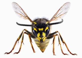 Was Wirklich Gegen Wespen Hilft Und Was Nicht