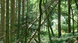Mit den Rangern in würziger Waldluft
