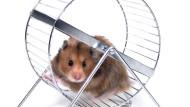 Alarm im Hamsterrad