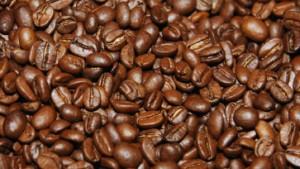 Wo der Kaffee wächst, stört das Klima nicht
