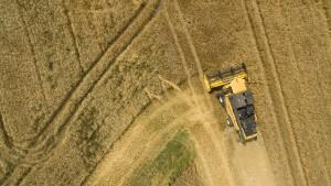Bauern sollten fünf Pflanzenarten anbauen