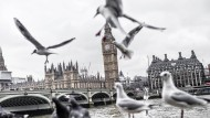 Schreckhaftigkeit in London