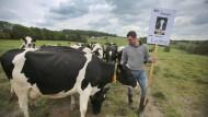 Geben einfach zu viel Milch: Kühe von Bauer Tobias Miebach in Hennef an der Sieg