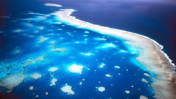 Fast alle Korallenriffe könnten verschwinden