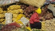 Die Chinesen: zum Kartoffel-Essen verdammt