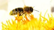 """Bienen sorgen für eine """"Bestäubungsleistung"""" von mehreren Milliarden Dollar pro Jahr."""