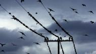 Ukraine will Strom aus Russland beziehen