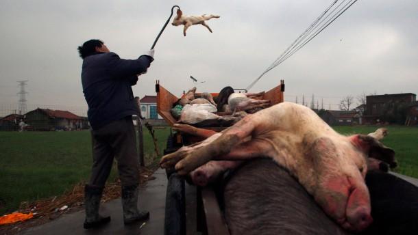 Wo ein Schweinsohr doppelt so teuer ist wie ein Filet