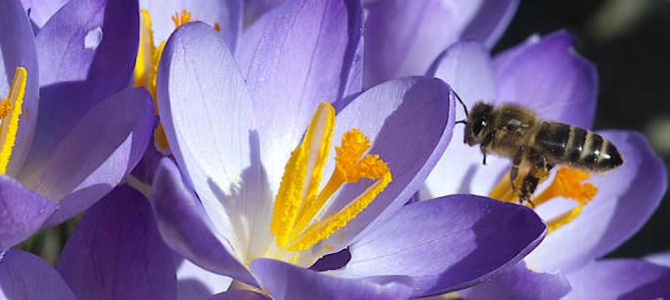 Wie Man In Seinem Eigenen Garten Etwas Gegen Das Insektensterben Tun