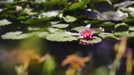 Ist der Teich erst angelegt, kommt der tierische Besuch von ganz alleine vorbei.