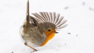 Im Namen des Vogels