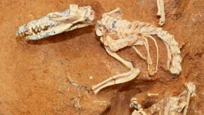 UJrsäuger, Fossil