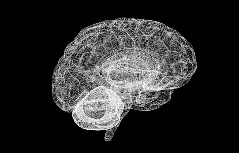 Unser komplexes Gehirn im Computermodell. Einer Nachbildung, die auch Reize empfinden kann, rückt die Forschung immer näher.