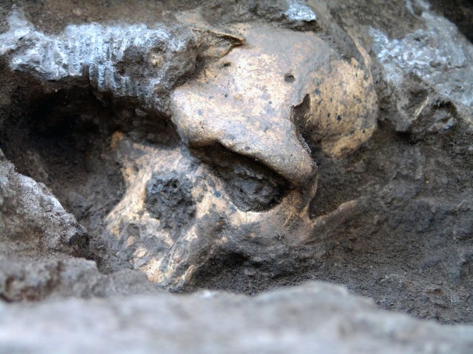Freigelegter Schädel an der Dmanisi-Fundstelle