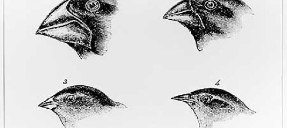 Darwin Finken Lügen Nicht Werk Faz