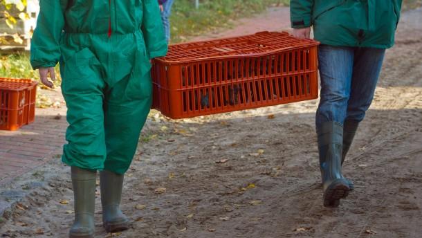 Schreckgespenst Vogelgrippe