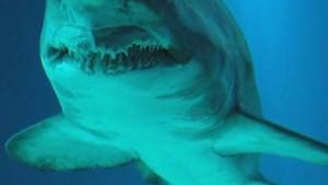 Ein einsamer Hai in der Tiefsee