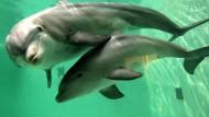 Delphine mit besonderer Spürnase