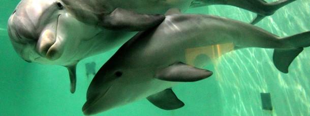 Haben Delfine auch einen Magnetsinn wie Vögel