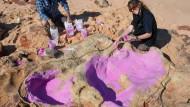 Als die Dino-Herden Westaustralien durchstreiften
