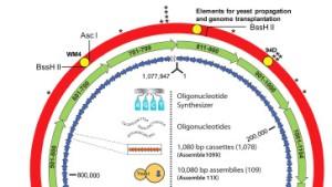 Die Angst vor dem Amok der Mikroben