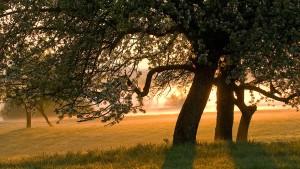 Der Klimawandel unterm Apfelbaum